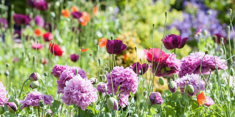 Basic Gardening Terms: Types of Plants